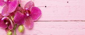 orchidea-come-curarla.jpg3