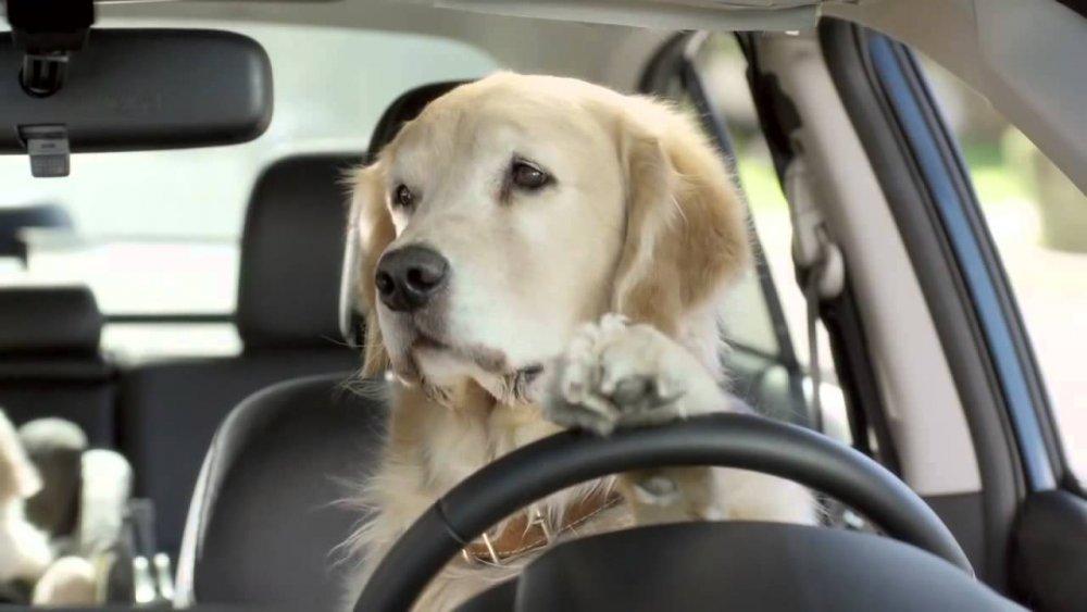 trasportini per cani