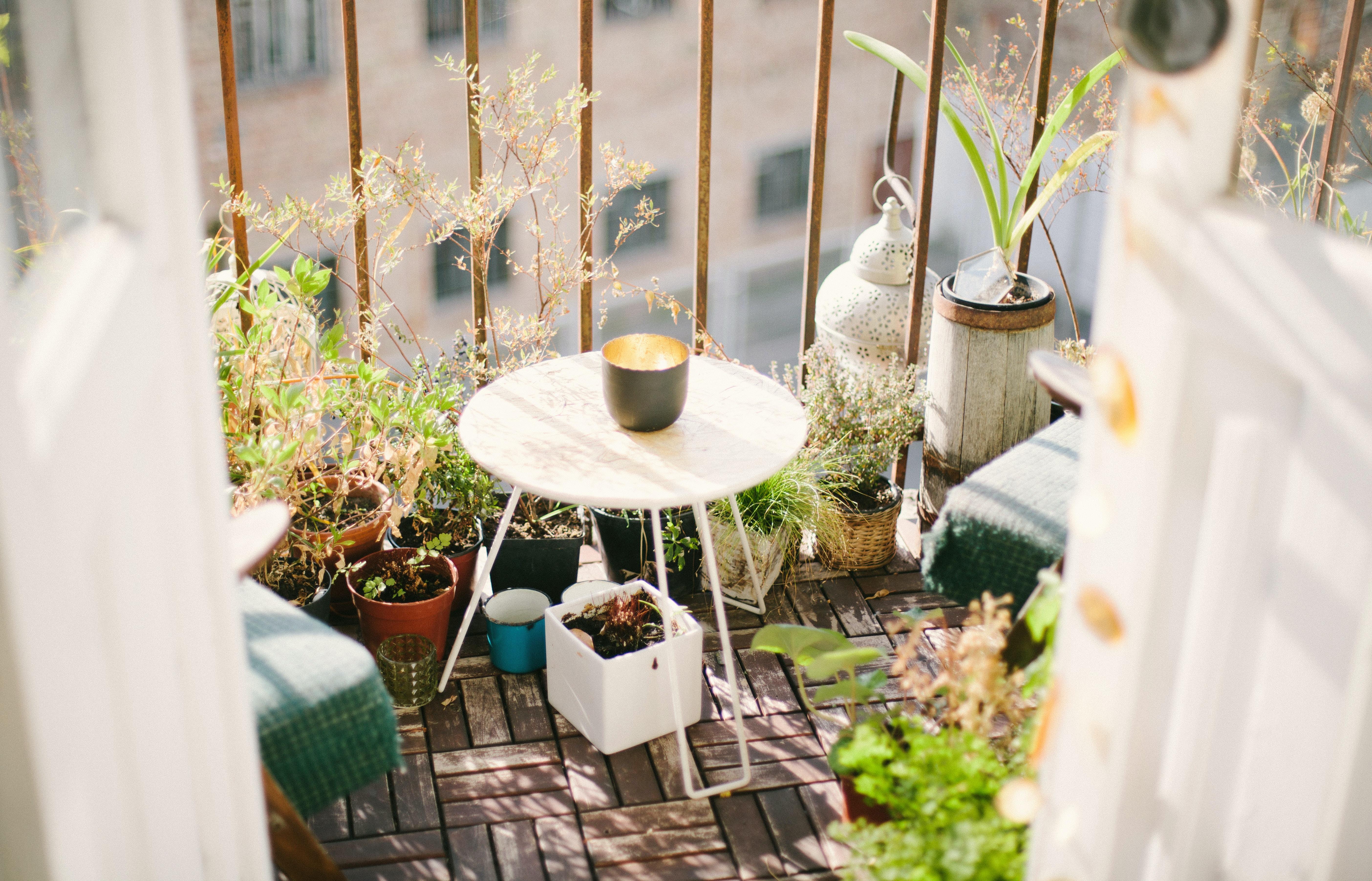 piante-da-terrazzo